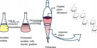 Fermentation Process Services